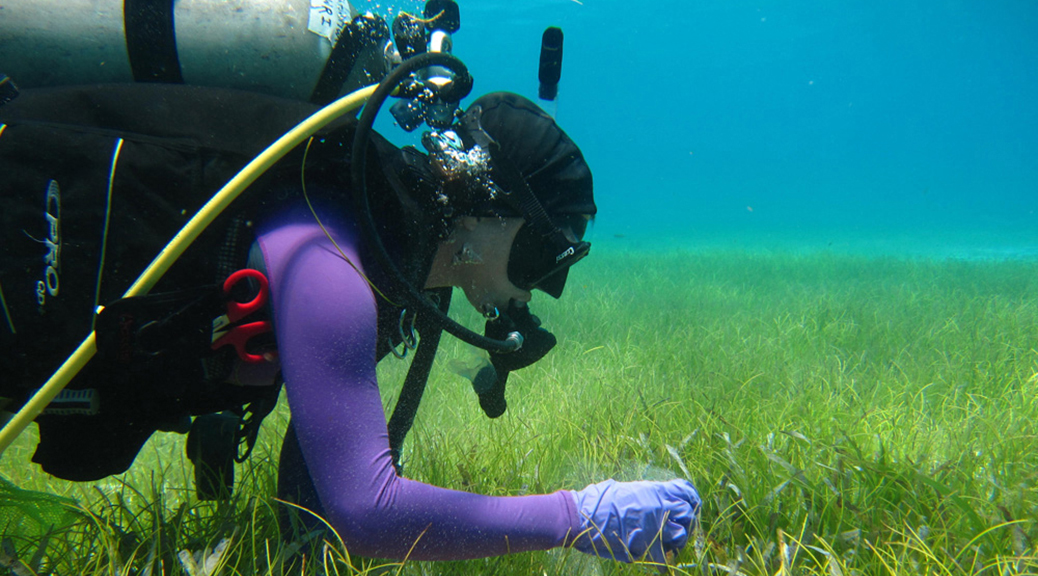 Diver in seagrass