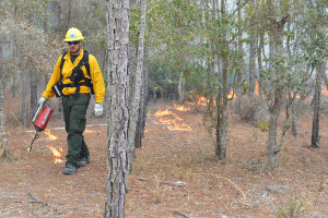 man in forest with prescribed burn