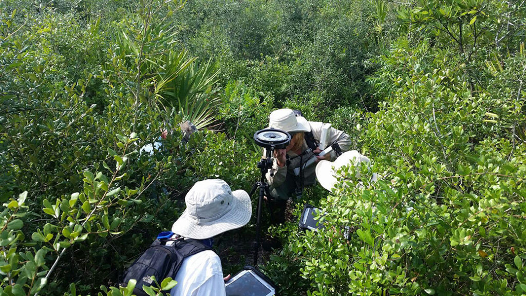 researchers in bushes